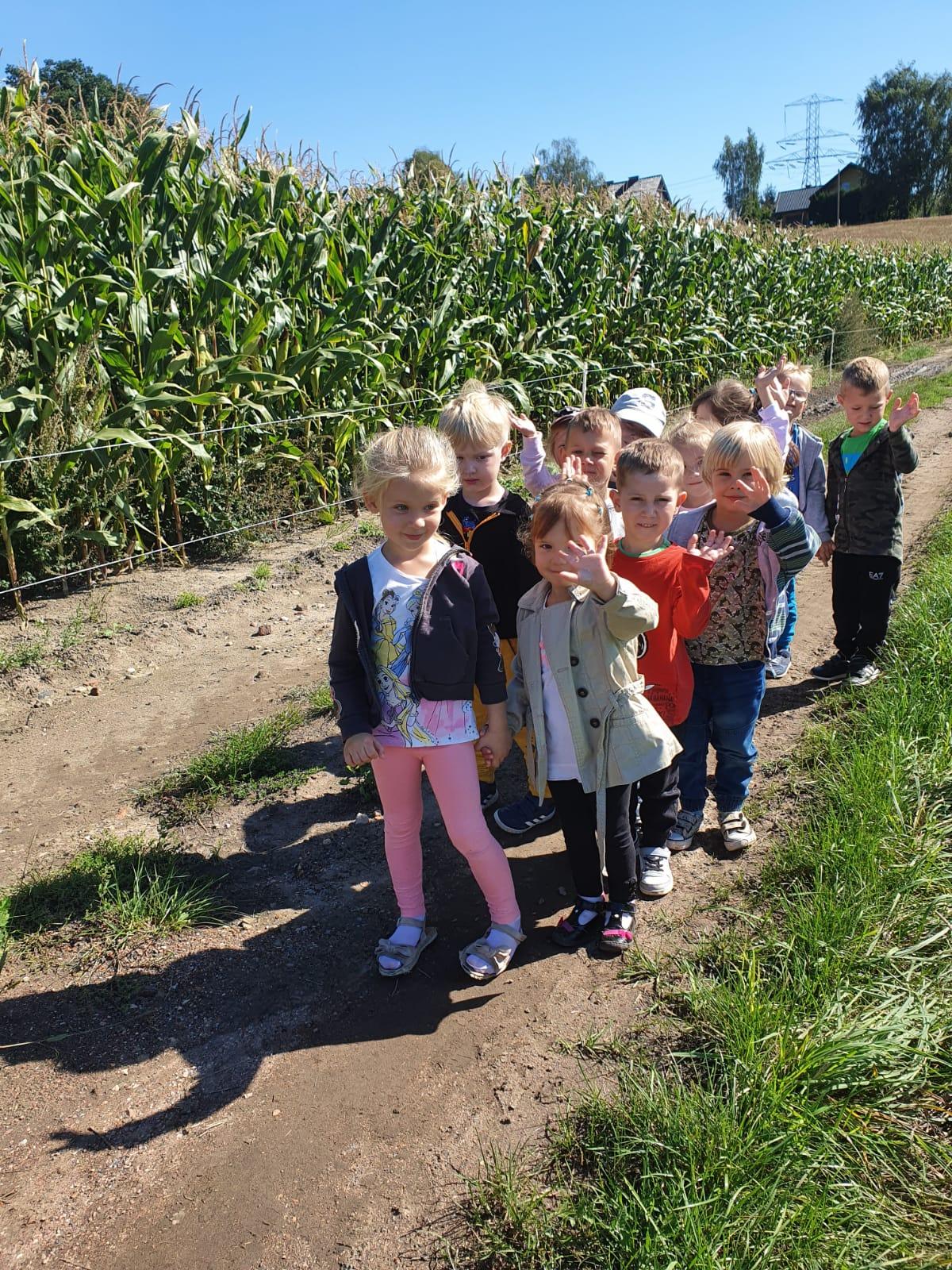 Świeci słońce. Dzieci idą w parach po drodze gruntowej obok pola kukurydzy.