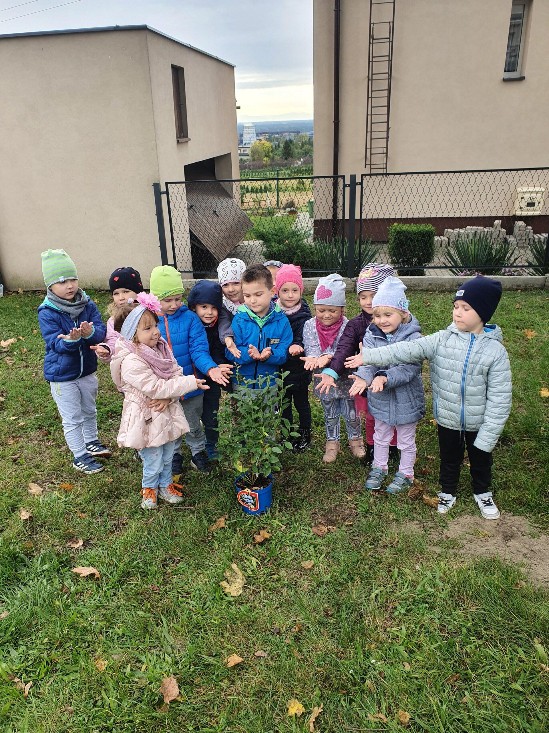 grupa dzieci stoi na podwórku, przed nimi stoi sadzonka borówki