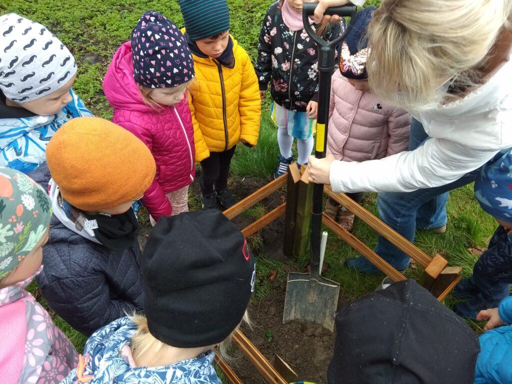 dzieci przyglądają się jak wychowawca wykopuje łopatą otwór na sadzonkę