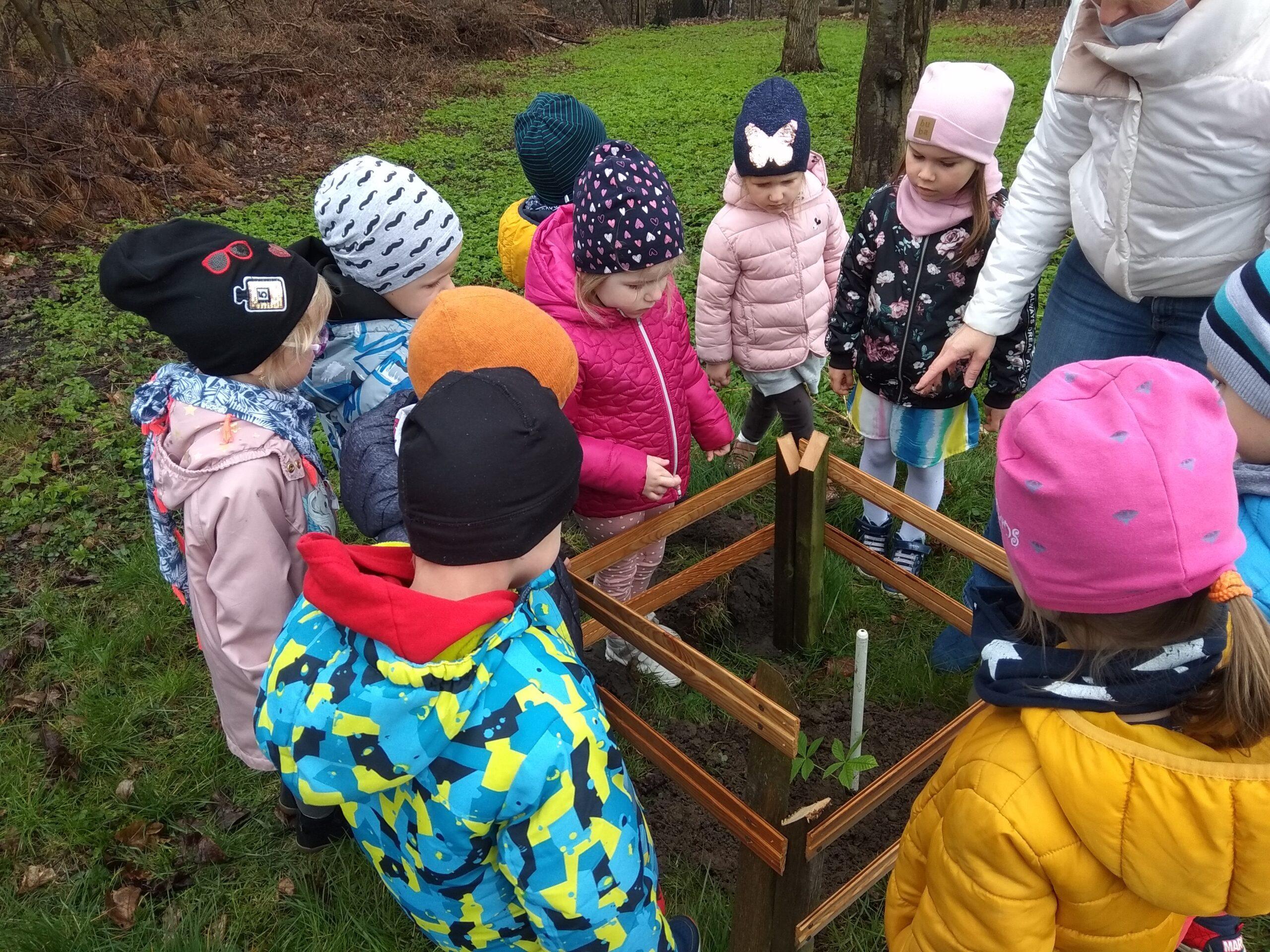 dzieci stoją dookoła posadzonego drzewka